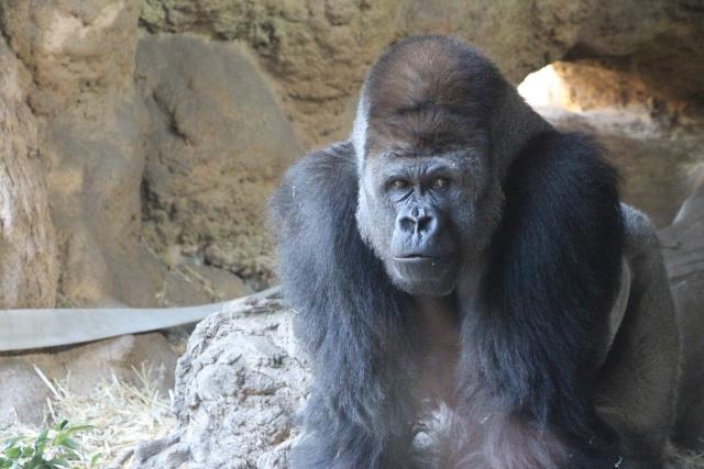 rwanda-golira