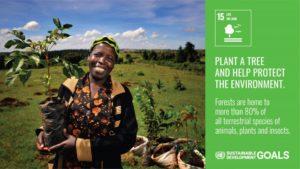 SDGsゴール15アクション