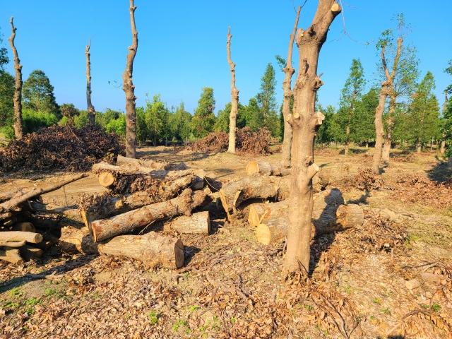 環境破壊のイメージ