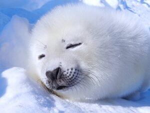 寝る(昼)のイメージ